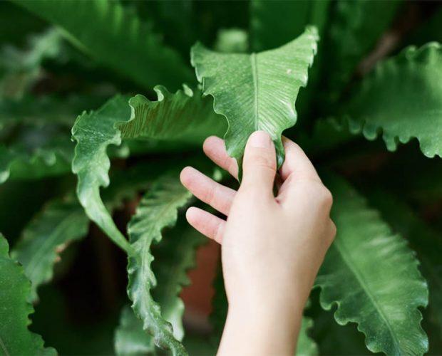 Mano che accarezza una pianta